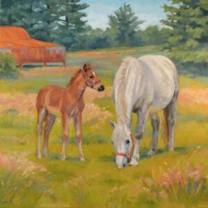 irish draught mare